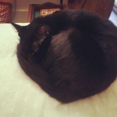 Sleepy Sweet Kitten