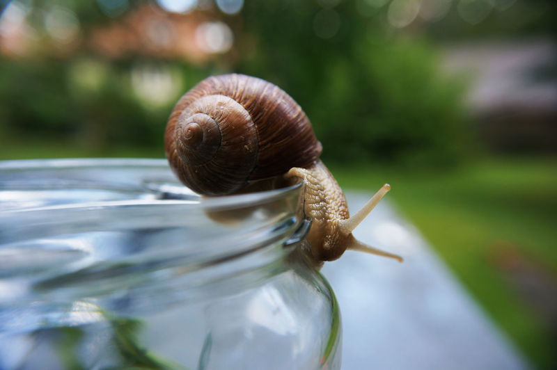 Animal Animal Themes Animals In The Wild Detail Focus On Foreground G No People One Animal Schnecke Wildlife