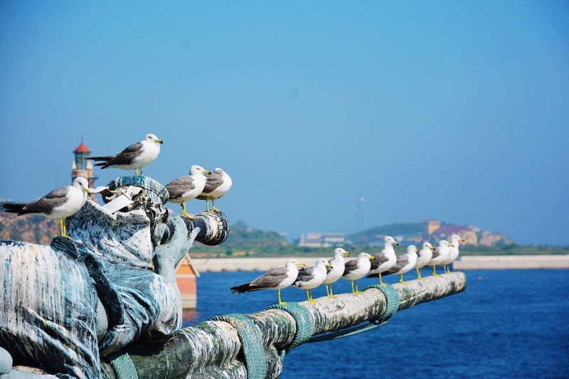 Birds On Statue Against Clear Blue Sky