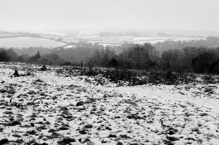 Mist On The Downs Black & White Otterbourne Beauty In Nature Blackandwhite Cold Temperature Landscape Nature Outdoors Scenics Shawford Snow Tranquil Scene Tranquility Tree Weather Winter