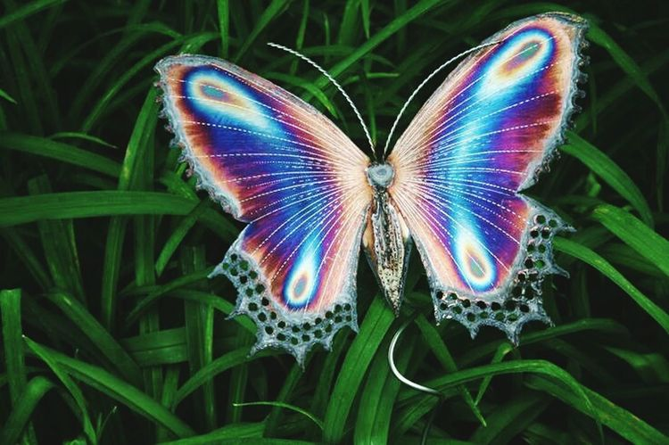 The beauty of nature Butterfly ❤