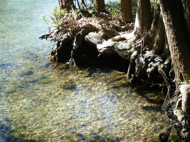 Trees Roots River Water Crystal Clear Clear Water Sun Blue Green