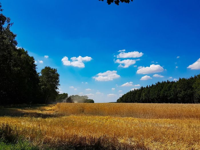 Mähdrescher auf 12 Uhr Germany Saxony Oberlausitz Reichenbach Tree Rural Scene Cereal Plant Agriculture Blue Field Sky Landscape Cloud - Sky Farmland Agricultural Field Combine Harvester Farm Corn - Crop Cultivated