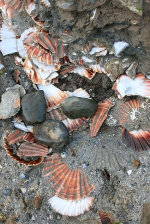 Nature's Diversities Taking Photos Check This Out Hello World Outside Outdoor Photography Nature Nature Photography Shells Seashells Seashells, Rocks, Sand Seashell Close-up Shells Beach Lakedistrict
