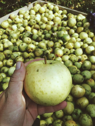 Working September... want some? Green apples're my favourite 🍏 Green Apples  Work September Tasty Orchard Apple Tree Apple Apple Blossom Fruit Tree Harvesting Juicy