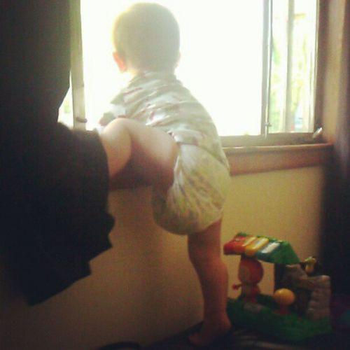 Monkey Climber Crazyboy SillyBoy