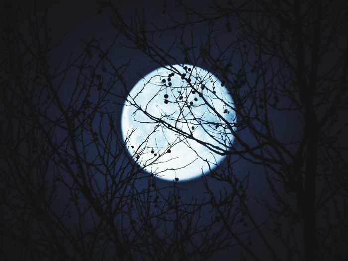 Moon Silhouette Night Circle Bare Tree Architecture No People Low Angle View Night Time Astronomy Branch Outdoors Sky Tree
