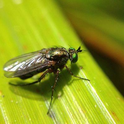 #improvedimage #fly #insect #macro #closeup #bug Macro Insect Fly Bug Closeup Improvedimage