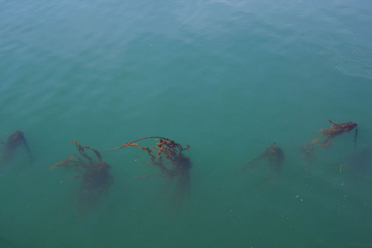 Water Sea Day Outdoors Marine No People Turquoise Colored Kelp Ocean Plant Calm