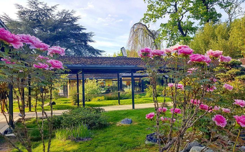 #parcfloral #fleurs #boisdevincennes #soleil🌞 #paris #printemps #avril #parismaville #parismonamour #parisienne Parcfloral Fleurs Boisdevincennes SOLEIL🙏 Paris Printemps Avril Parismaville Parismonamour Parisienne Flower Tree Multi Colored Sky Plant