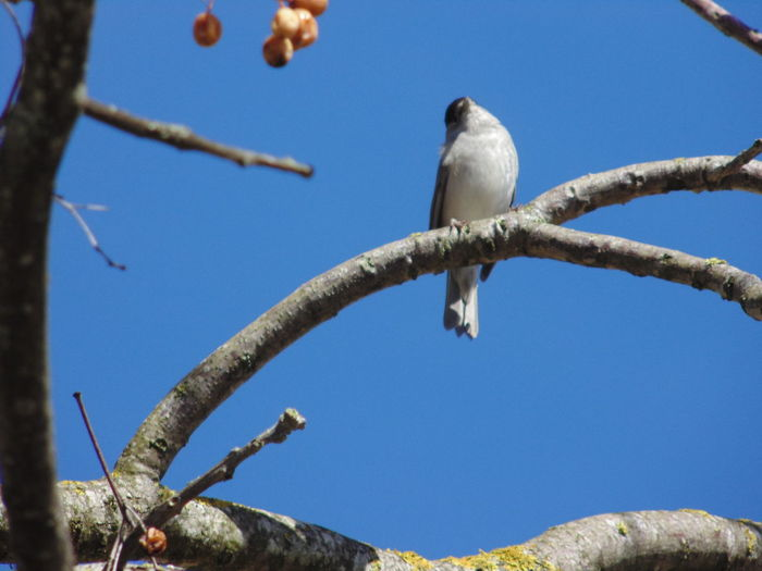 Low angle view of bird perching on tree against sky