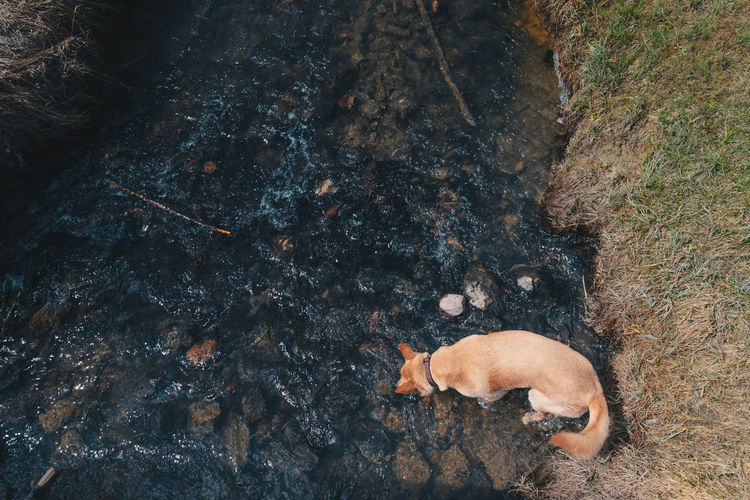 High Angle View Of Dog In Stream