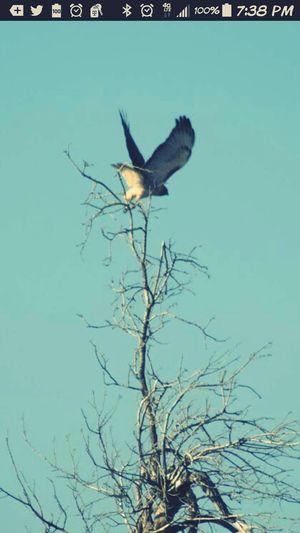 Ferocious Birds Of Prey :) The Birds wild