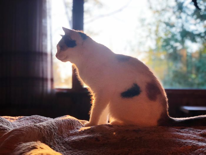Morning Light Morning Sun Morning Sunrise The Week on EyeEm One Cat Cats Pets Domestic Animals Focus On Foreground Window Side View Sitting Sunlight Indoors  Day Tree
