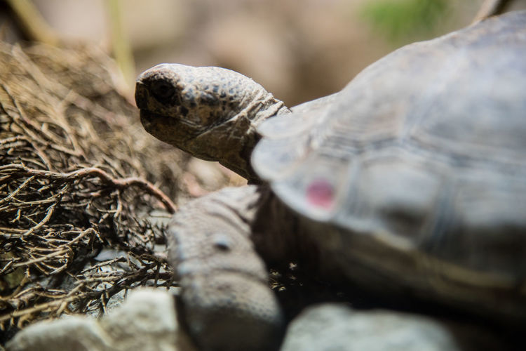 Close-Up Of A Turtle In The Wild