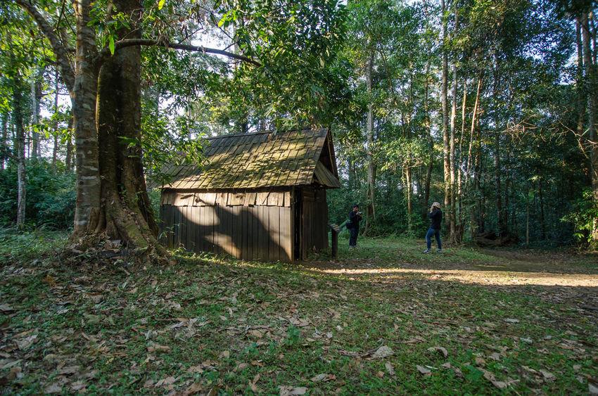 Phuhinrongkla National Park National Park Nature Phitsanulok Rock Thailand Travel Forest Landscape Mountain Phuhin Rongkla Sky Train