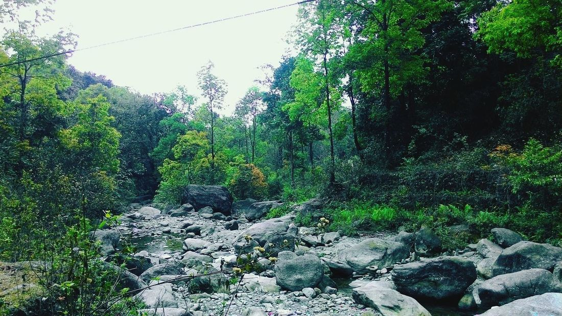Tree Nature Green Color No People Outdoors Beauty In Nature Sky Forest Landscape Nature India WestBengal Dooars Dooars__trip