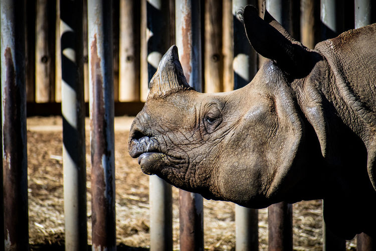 rhino Animal Animal Themes Rhino Zoo Aniaml Eye Close-up