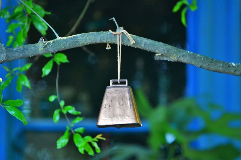 Bell Hanging From Branch