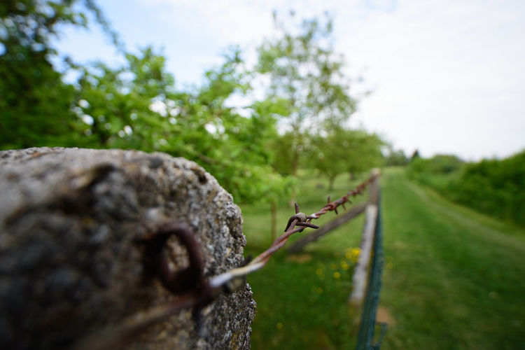 Close-up of barbed wire on plant against sky