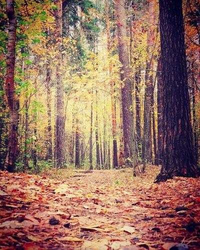 Perm' осень гуляем балатовский лес Perm отличное настроение