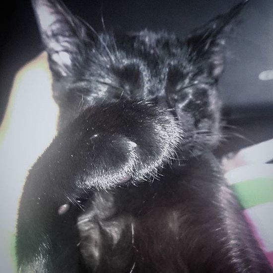 I'm shy Cats Bestmeow Bestcats_oftheworld Bestcats_oftheworld Bestcat Excellentcats Meowbox All_shots Like4like Lovecats Cute Photooftheday Picoftheday Webstagram Meow Meow_beauties
