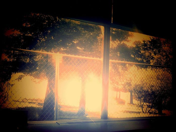 Window To The Woods Future Atomic Fate's Forest Technology Is The End Tree Trees Inside Looking Out Sureal Surreal
