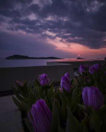 Purple Flower Sunset Landscape Sea Beauty In Nature Nature Outdoors Travel Destinations Cloud - Sky Horizon Over Water Beach Water No People Vacations Beauty Dawn Flowers, Nature And Beauty Balcony Travel Cavtat , Croatia Island EyeEm Best Shots Photography Ocean