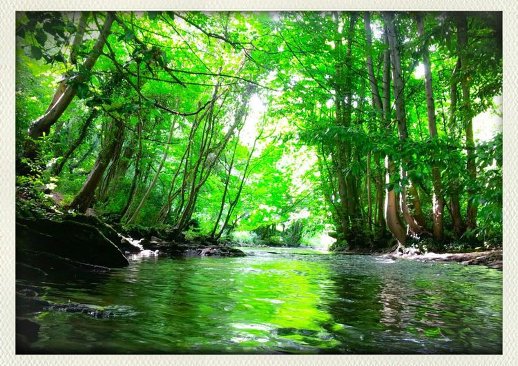 green canel