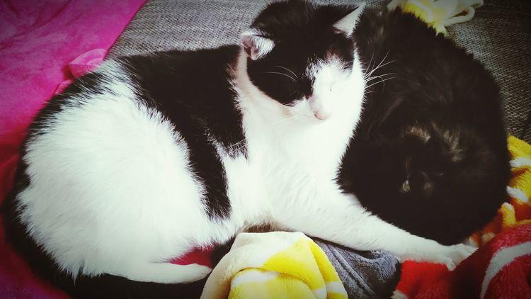 Was für ein schöner Tag zum Schlafen xD Relaxing Cats Cat Cute Pets Firehype Home Sleeping Cat