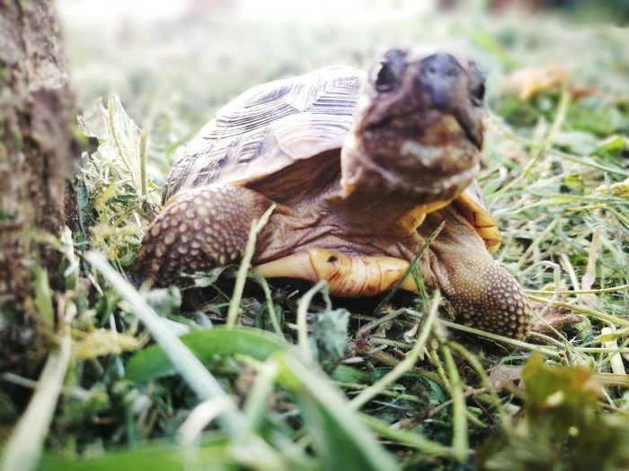 what are you seeing? 😀 Tortoise Shell Reptile Tortoise Close-up Grass Turtle Slow