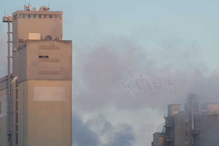 Birds flying over buildings against sky