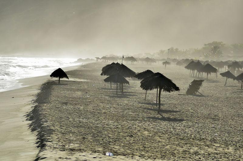 Palmas Inertes!!! @shivaluisa Eye4photography  EyeEm Best Shots The Purist (no Edit, No Filter) Landscape_Collection