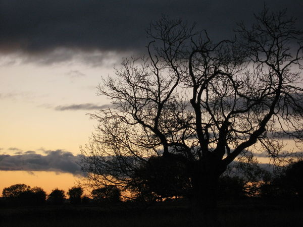 End of Sunset Bare Tree Cloud - Sky Country Countryside Dark Landscape No People Orange Color Rural Scene Scenics Silhouette Sky Sunset The Cotswolds Threatening Sky Tranquility Tree