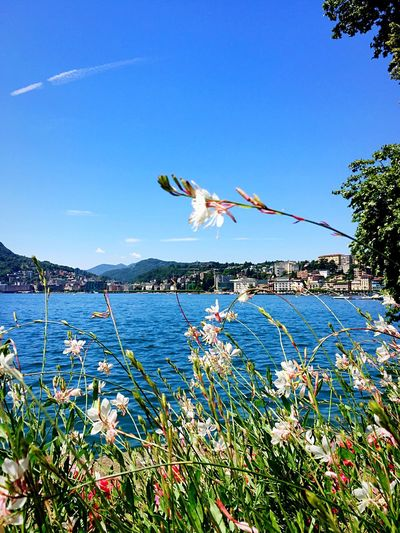 Fresh Flowers By Sea Against Sky