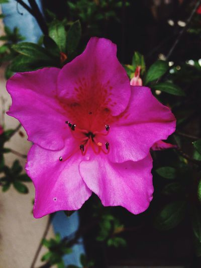 Enjoy The Nature Enjoythetime Followme Flower