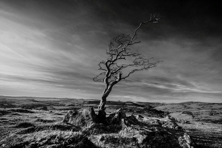 Dartmoor Tree TreePorn Hugging A Tree Landscape Blackandwhite Monochrome Drama Light And Shadow
