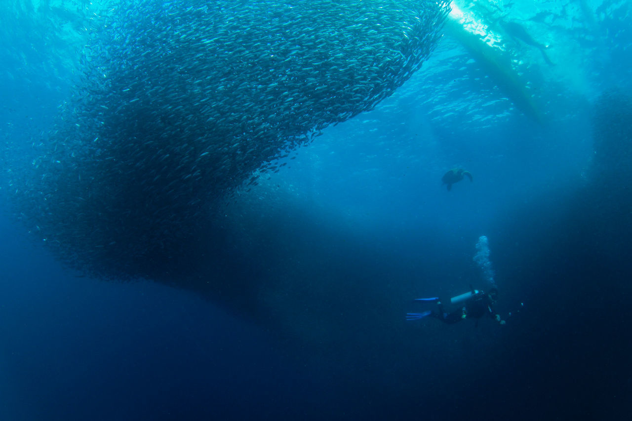 UNDERWATER VIEW OF PEOPLE SWIMMING IN SEA