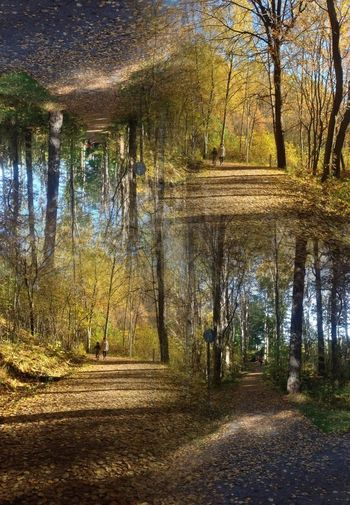 the path Trees Naturelovers Nature Autumn