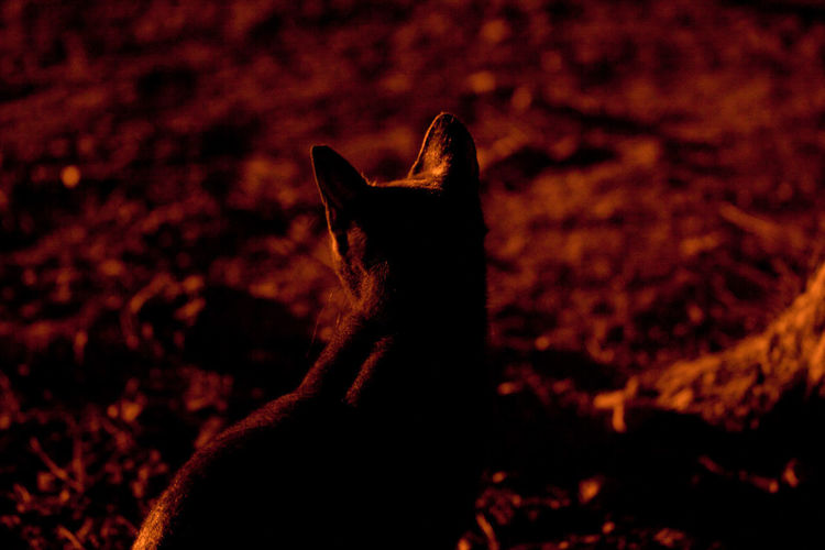 Cat at the archaeological site of the Temple of Zeus. Artificial Light Cats Of EyeEm Cats 🐱 Night Lights Night Photography Nightphotography Street Light Cat Cats Catsagram Catsofinstagram Catstagram Cat♡ Dark Domestic Field Mammal Monochrome monochrome photography Nature Night One Animal Pets Street Lights Vertebrate