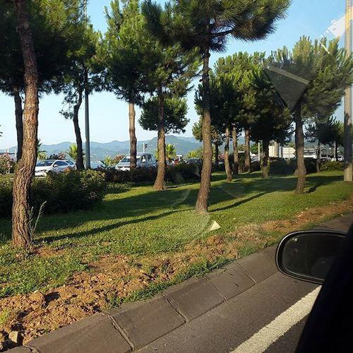 Yemyeşil bir yolculuk ve ben gözlerimi camdan alamıyorum! 😍😍😍 Karadeniz Blacksea Yeşillik Travel city holiday green summer happy scienery Ordu Fatsa Turkey noeffect nofilter