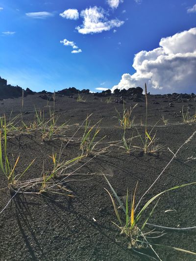Blue Sky Lava Sand Green Grass Details Break Iceland216