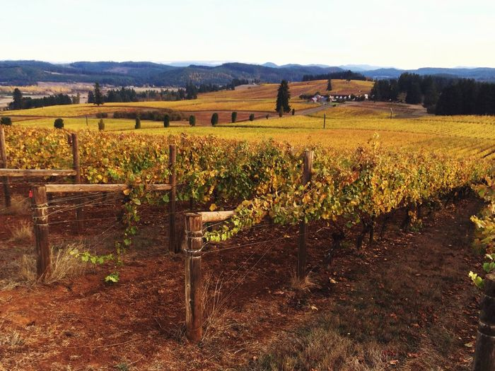 IPS2015Fall IPS2016Composition Wine Country IPhoneography IPS2016Landscape