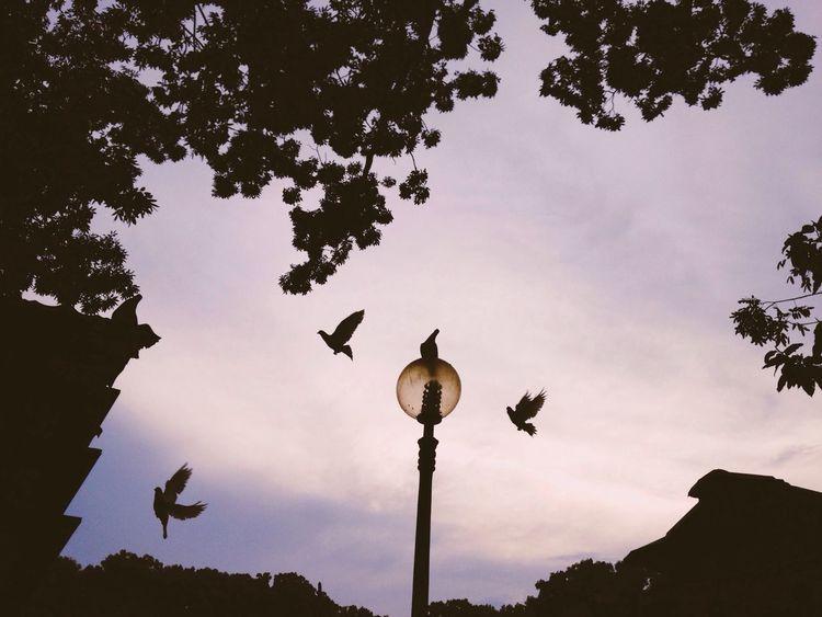 Twilight of Pigeons - Silhouette IPSEmotions The Illusionist - 2014 EyeEm Awards Light And Shadow