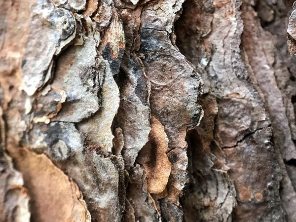 Rough pine bark. Full Frame Pine Bark Bark Tree Bark Textured  Backgrounds Nature Close-up Brown Rough Tree Trunk Beauty In Nature Tree No People Outdoors Day Macro