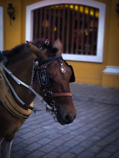 Lucky.. Pet Portraits Portrait Horse Domestic Animals Street Mammal Animal Themes Horse Cart No People Outdoors Day