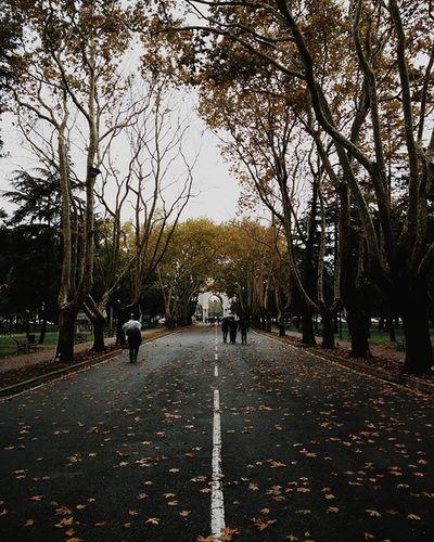 Son Bahar || İstanbul Üniversitesi Beyazıt Kampüsü Sonbahar Fall Autumn Istanbul Türkiye Trees Road Symetry Mi4 Zharipxistanbul