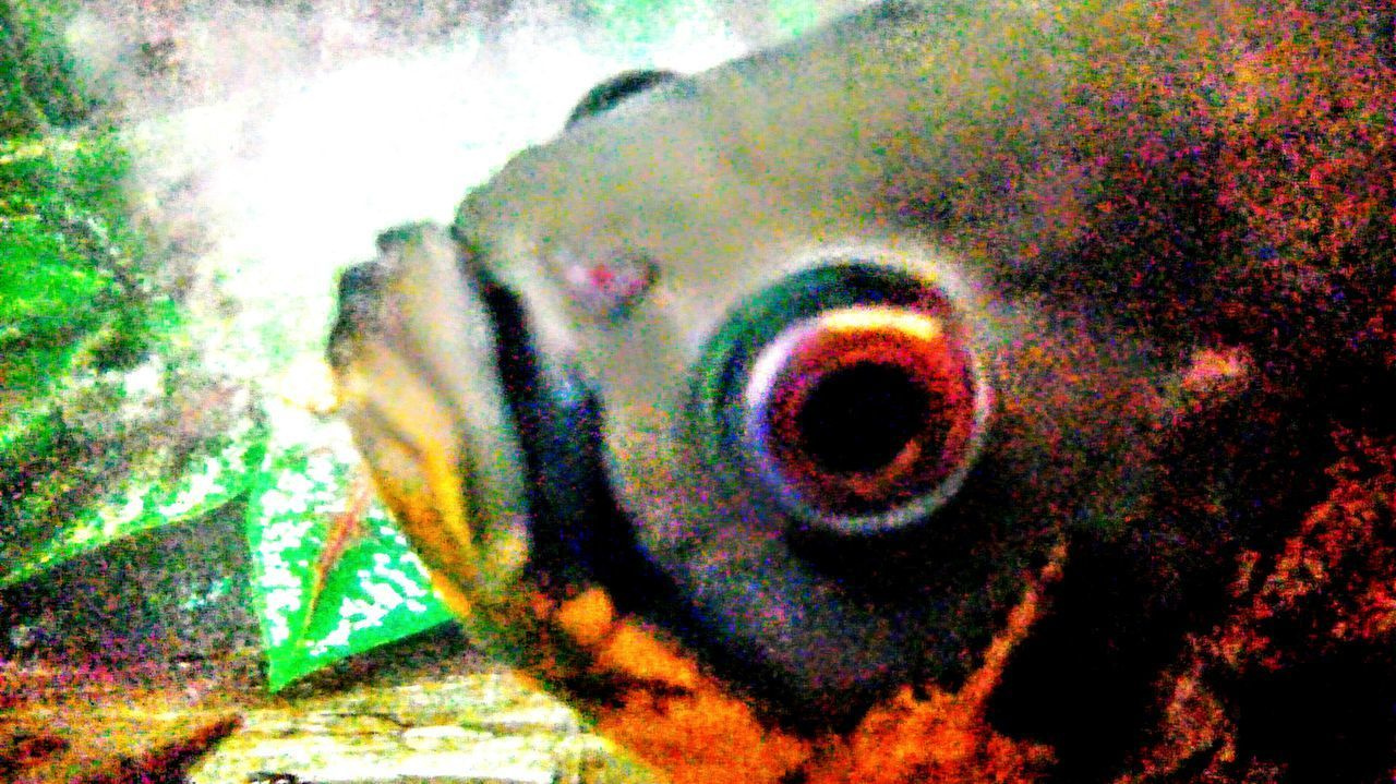 multi colored, green color, close-up, no people, nature, indoors, eyeball, animal themes, day, undersea