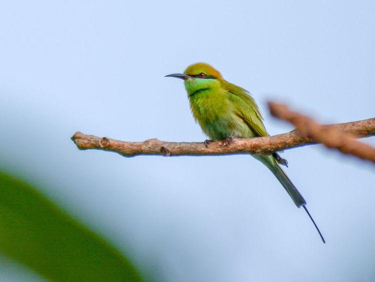 Bird Nature Beauty In Nature Bird Photography Birds Of EyeEm  Eye Em Nature Lover Green Bee-eater