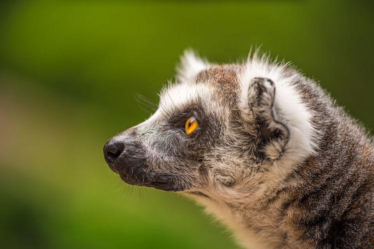 Close-up of an animal looking away